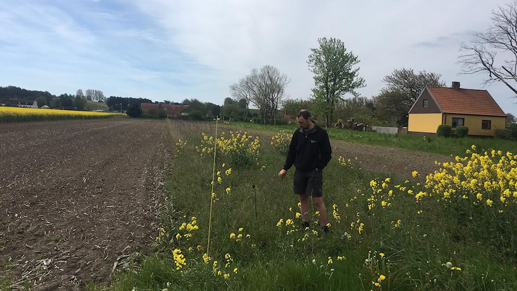 Martin Andersson är lantbrukare och med i projektet odling i balans