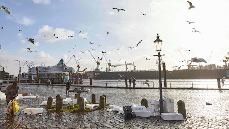 Hamnen vid Fischmarkt i Hamburg. Foto: Georg Wendt/TT.