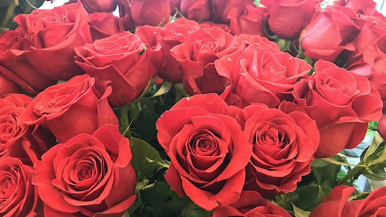 Massor av rosor i blomsterbutik i Malmö. Foto: Ann-Marie Lindqvist/Sveriges Radio.
