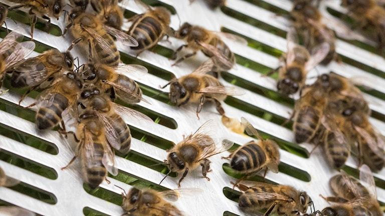 Många bin