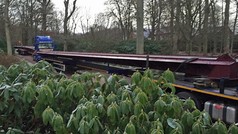 Broelementen som ska bilda ny bro genom rhododendronskogen anländer till Sofiero. Foto: Anna Hanspers/Sveriges Radio.