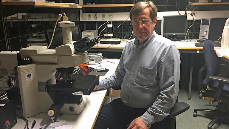 I sitt mikroskop har Lars Edvinsson i många år studerat hjärnan för att se vad som händer när migrän uppstår. Foto: Anna Landelius/Sveriges Radio