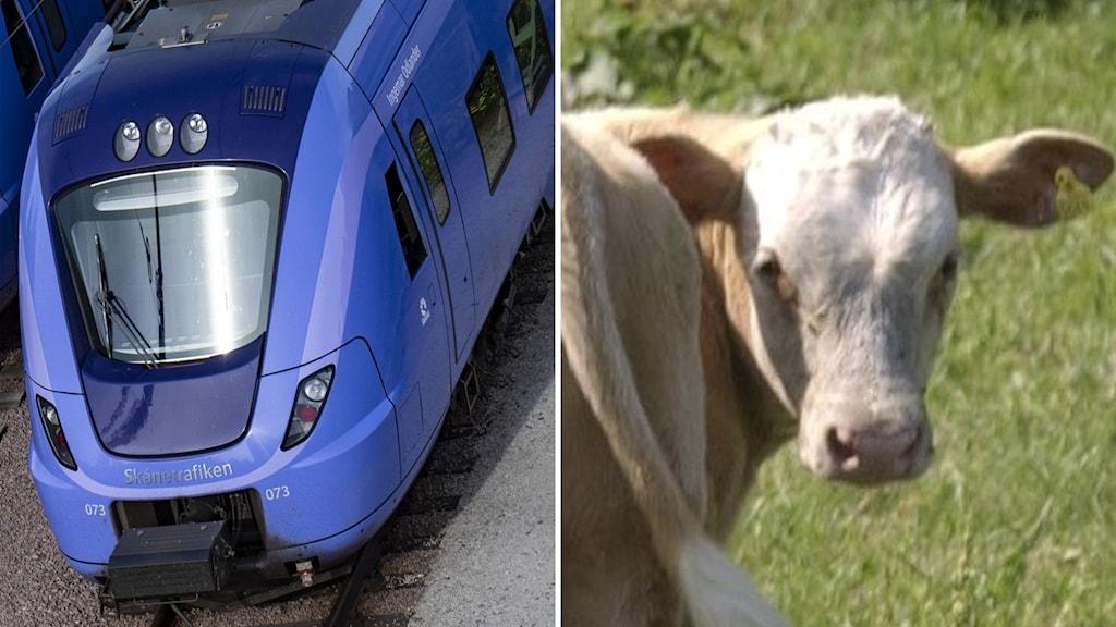 Till vänster tåg, till höger ko.