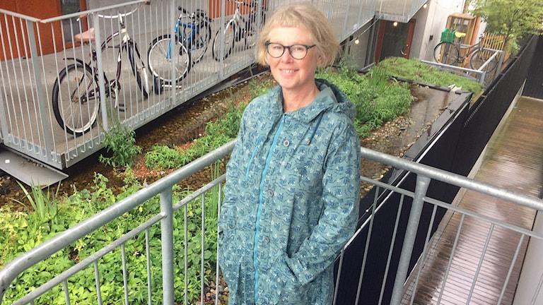 Astrid Kruuse är projektledare för BiodiverCity i Malmö där man anlägger gröna tak för att få staden att leva - och det gillar stenhumlan. Foto: Odd Clausen/Sveriges Radio.