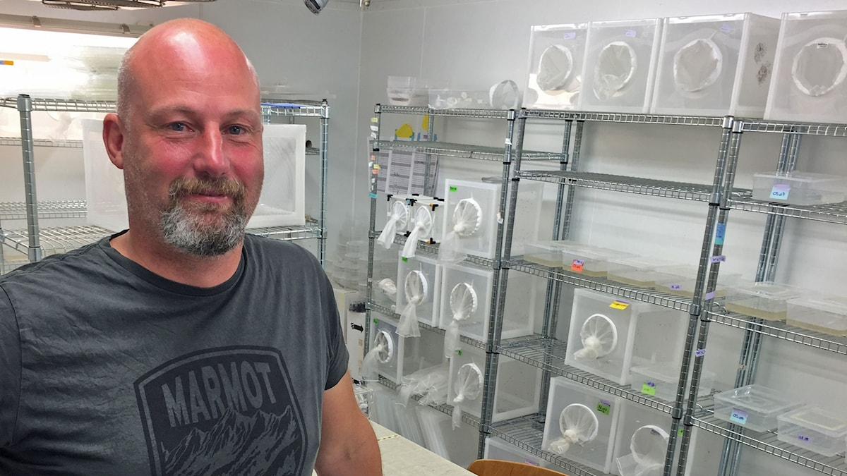 Rickard Ignell, myggforskare