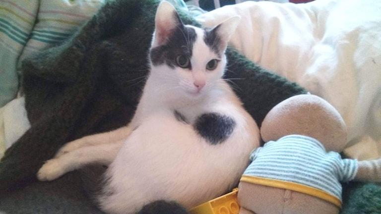 Katten Silva