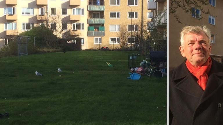 Måsar på innergård i Malmö och Naturvårdaren Ola Enqvist