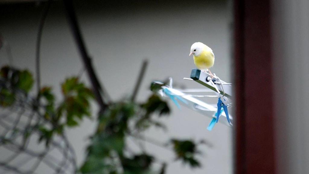 Gul fågel på tvättkarusell