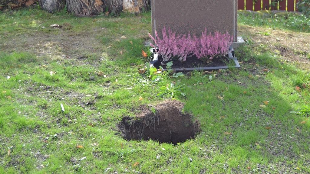 Ett hål i marken framför en gravsten.