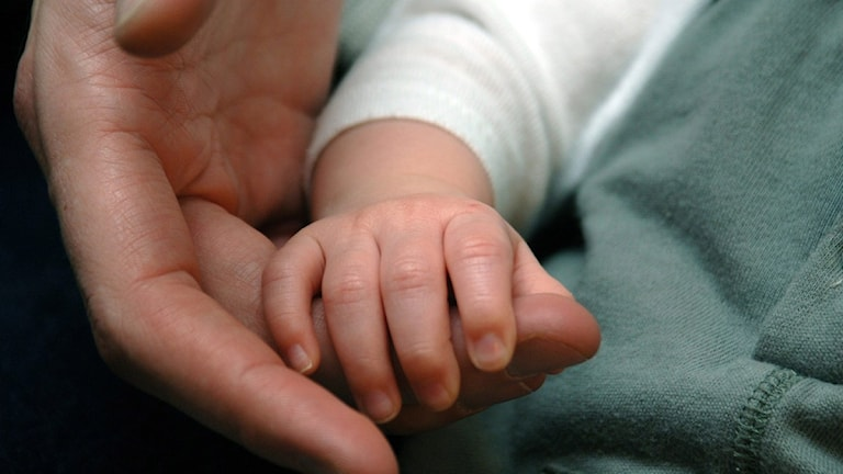 Liten babyhand håller pappas stora hand. Foto: Hasse Holmberg/TT