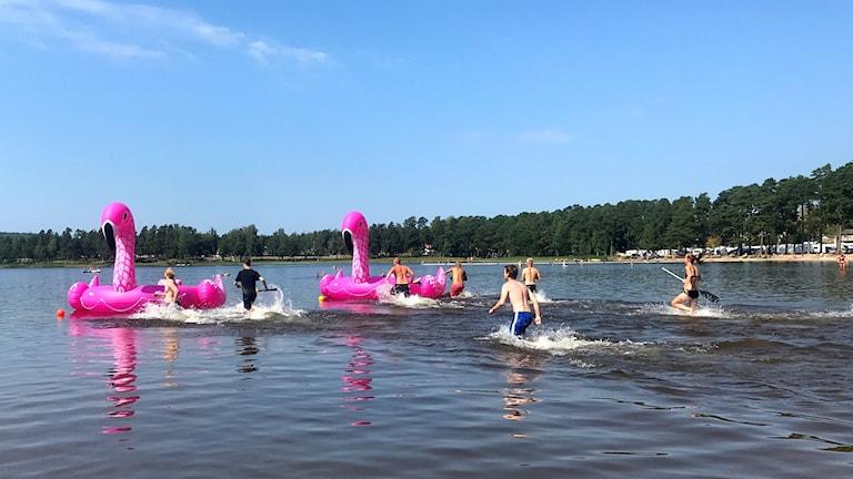 Personer som springer i vattnet mot två stora uppblåsbara Flamingos.