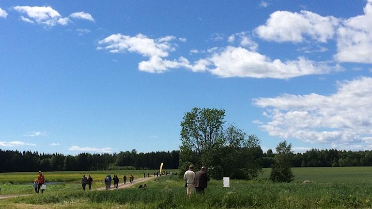 Blå himmel och gröna fält med människor som vandrar bort mot den ekologiska träffen.