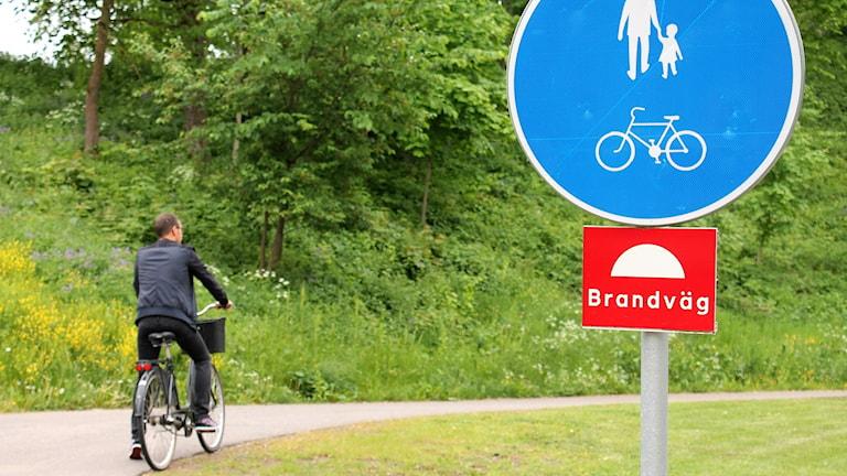 Cyklist på cykelväg. Foto: Marie Schnell / Sveriges Radio