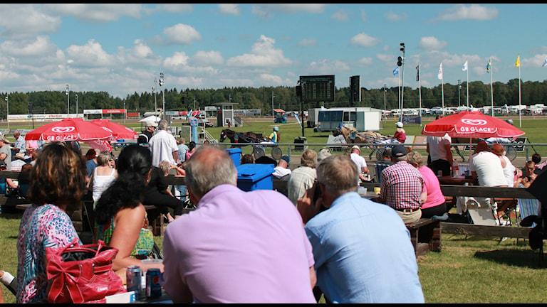 Axevalla travet hölls i helgen. Uppvärmning inför Stochampionatet som gick under söndagseftermiddagen. Foto: Jessica Shanthi Säll /Sveriges Radio.