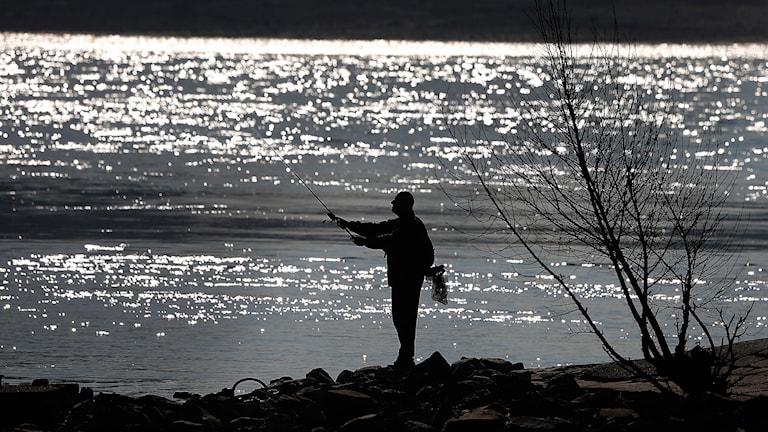 En man fiskar. Foto: TT