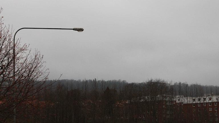 En grå himmel och träd i novemberskrud. Foto: Marthina Stäpel / Sveriges Radio.