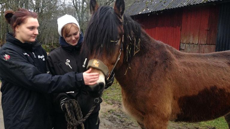 Hästolyckan i Vara