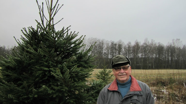 Julgransodlare Åke Settergren i Klämmesbo Foto: Maja Falkeborn Willner/P4 Skaraborg