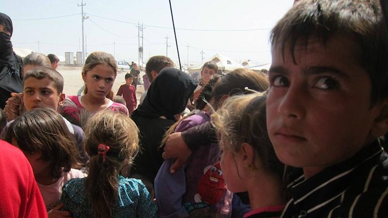 Yazidiska barn på ett tältläger i irakiska Kurdistan