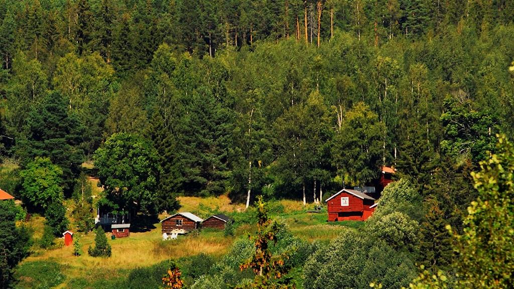 Hus i skogen. Foto: Hasse Holmberg / TT
