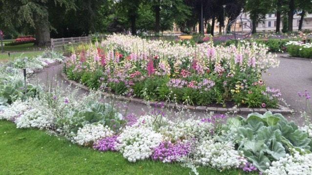 Monika Sjöstand skickade oss en fin bild på stadsträdgården i Lidköping