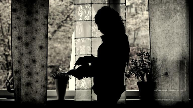 Kvinna vattnar blommor bakom gardin. Foto: Fredrik Sandberg / TT