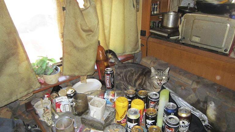 En katt sitter på ett bord fyllt av tomma ölburkar, matrester och skräp. Foto: Länsstyrelsen