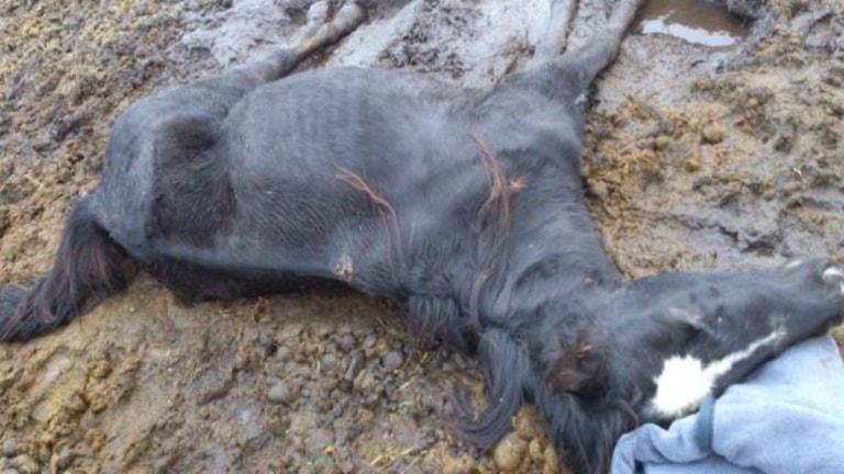 Stoet Cool gardiegirl vanvårdades och dog i sin hage för ett år sedan Foto: Polisens förundersökning
