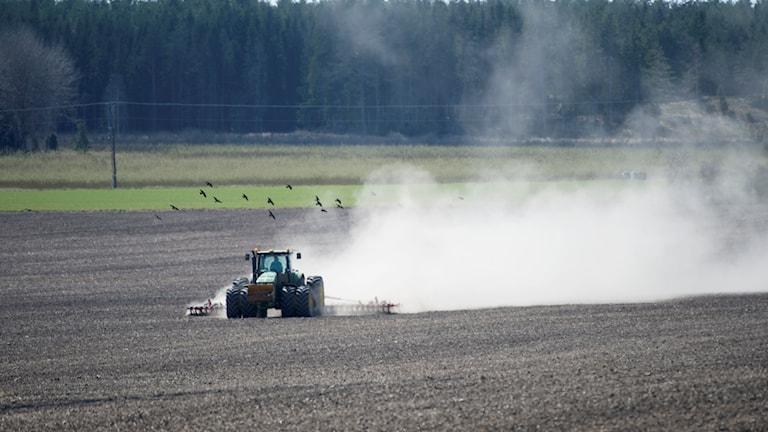 Traktor på fält. Foto: Fredrik Sandberg / TT