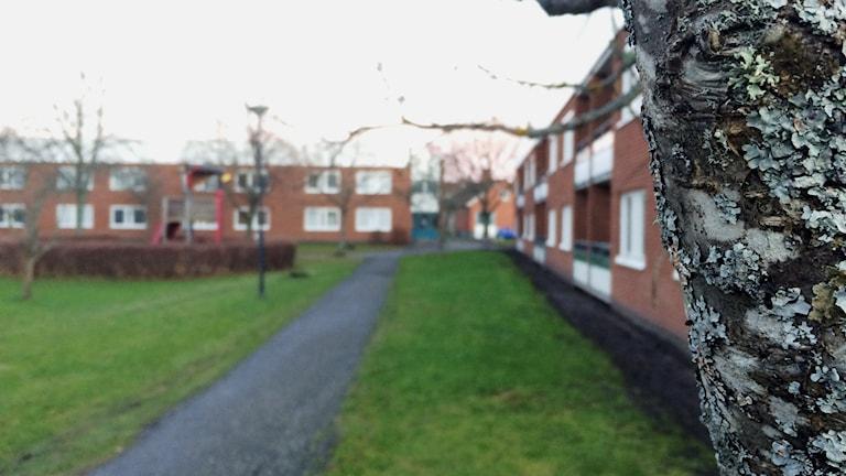 Det är i det här kvarteret på Ågatan det nu brunnit sex gånger. Foto: Mats Öfwerström/Sveriges Radio