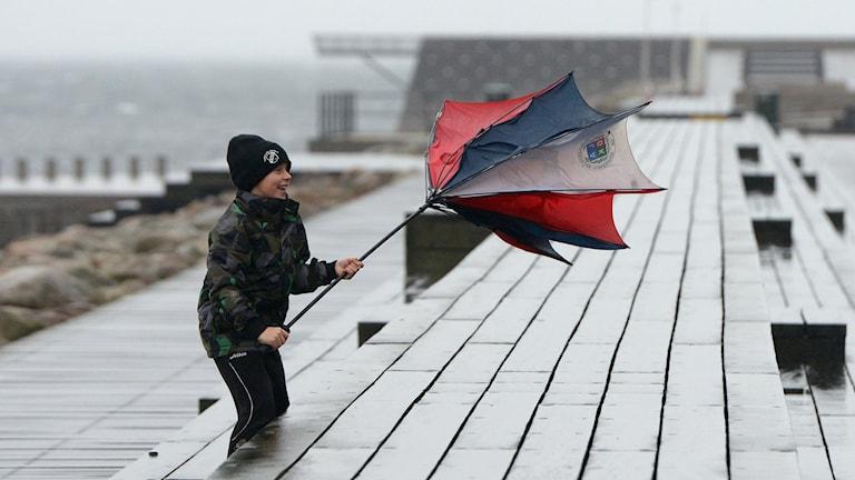 Albin testar vindriktningen med ett paraply. Foto: Johan Nilsson / TT.