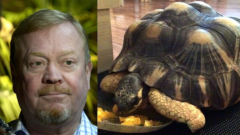 Jonas Wahlström och sköldpaddan Trine