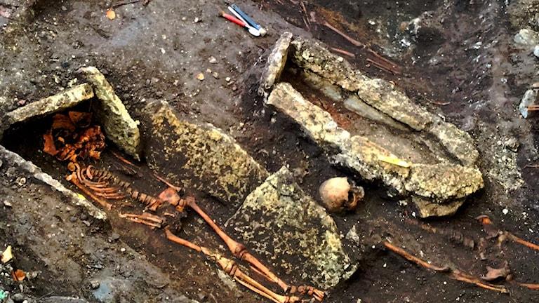 Utgrävda skelett i Varnhem