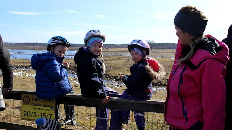 Matteo, Lama, Kayla och Marit Landtsverk tittar på tranor.