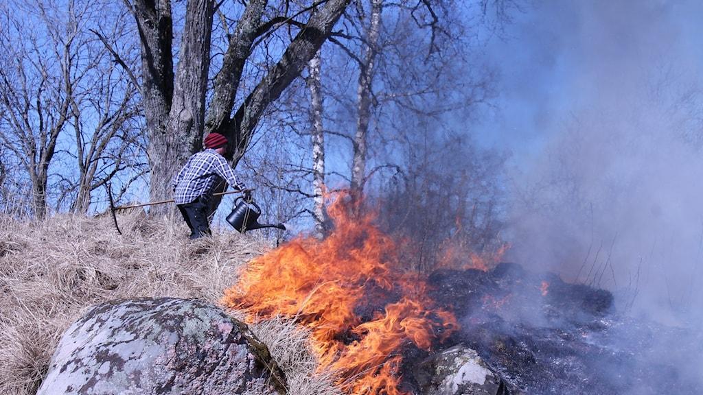 Fjolårsgräset på en kulle brinner och Clara Montalba kontrollerar elden med hjälp av en vattenkanna.