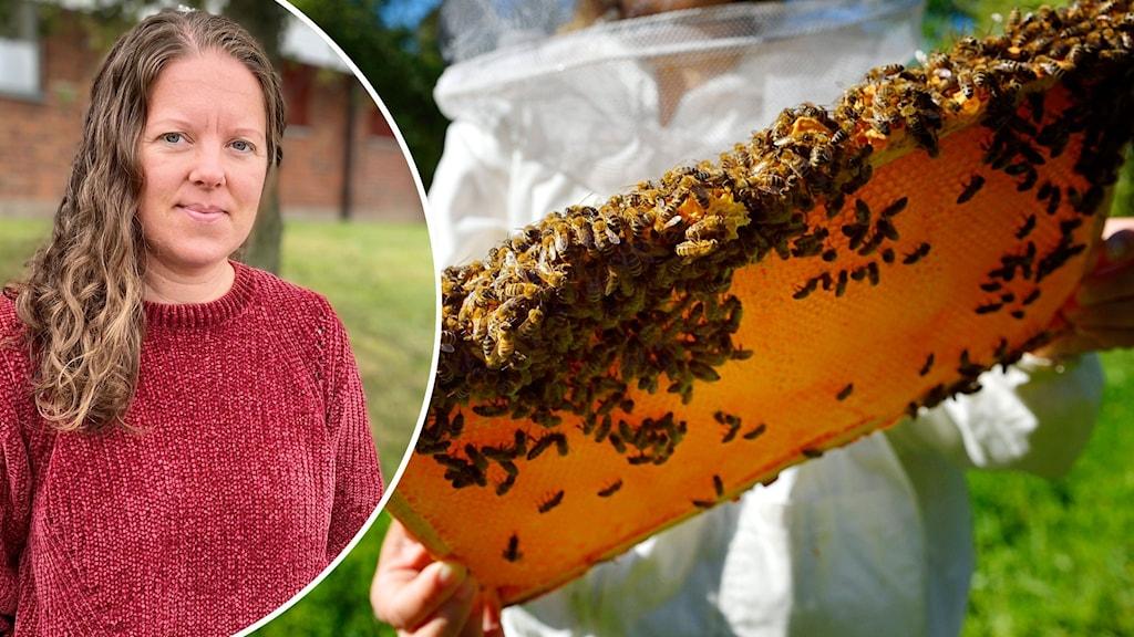 Montage med Maria Wetterström Stålarm och en person som håller upp en karta med honung från en bikupa.