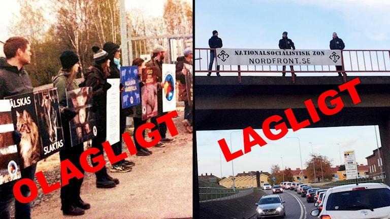 Djurrättsmanifestation och nazistmanifestation