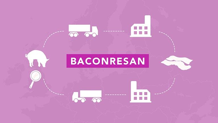 Baconresan