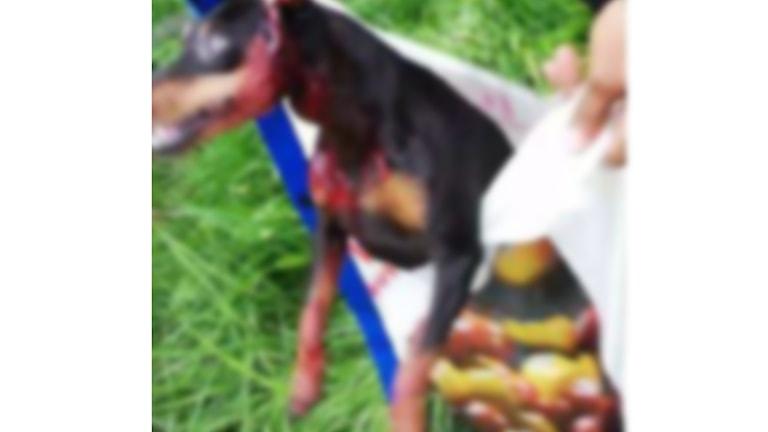 En hund med blod på sig som läggs ner i en plastpåse