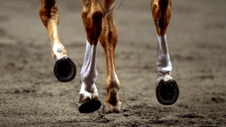 hästhovar