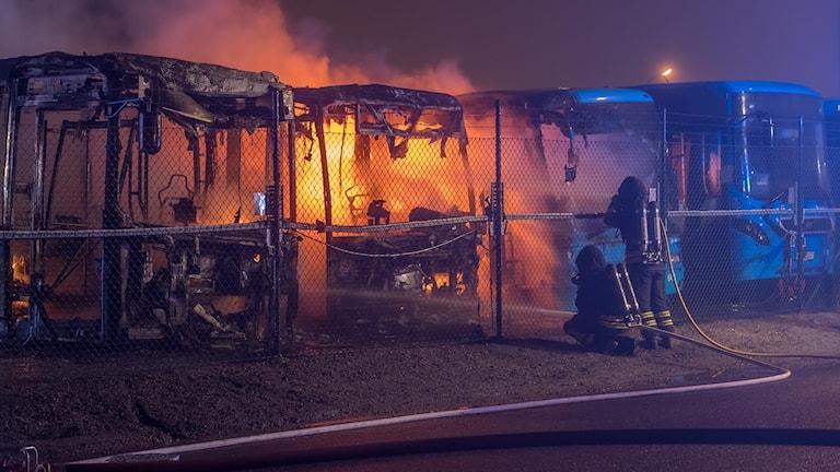 Fyra bussar bredvid varandra. Två är helt utbrända och en brandskadad.