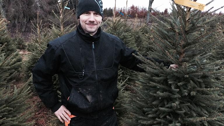 Erik Jungåker bland julgranarna
