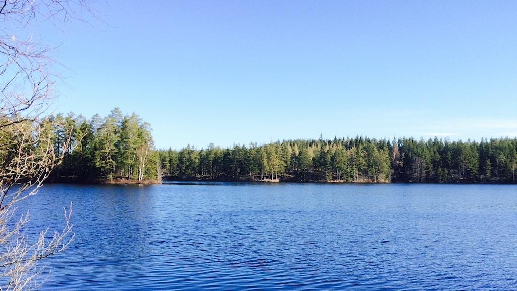En vacker vy över en sjö i tiveden.