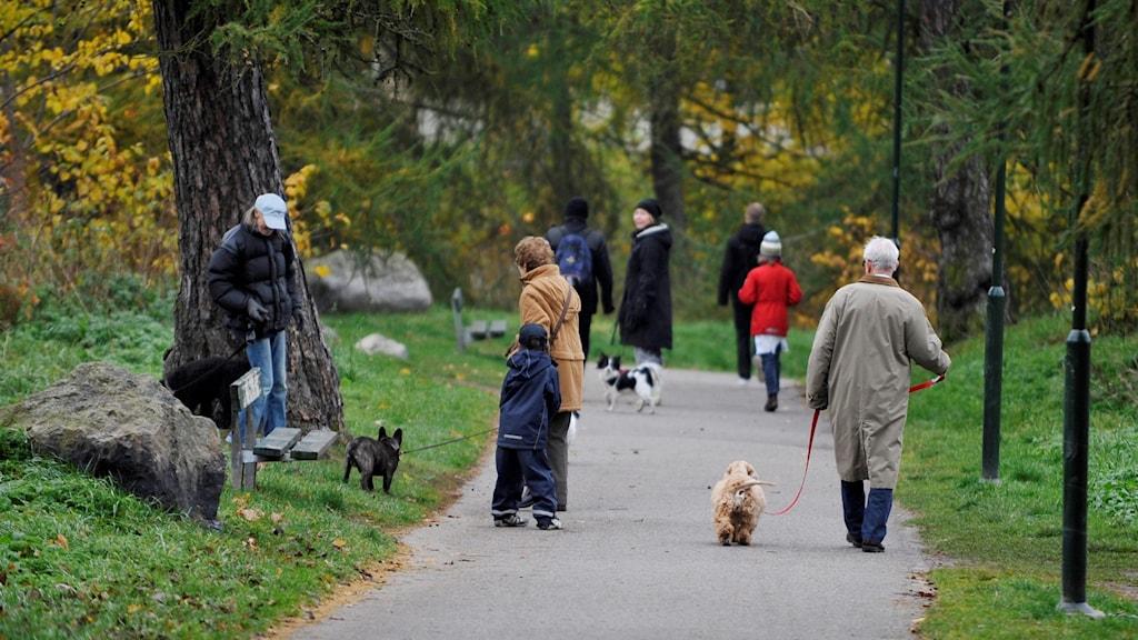 Hundar på promenad med sina ägare
