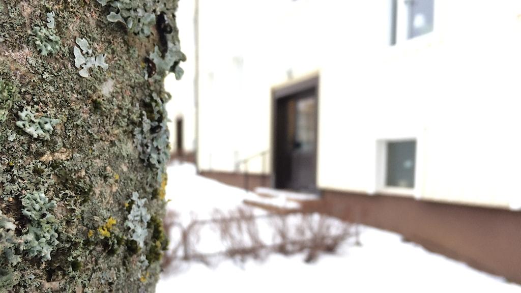 Ett träd med en suddig lägenhet i bakgrunden