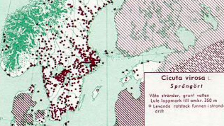 Utbredningen av sprängörten Cicuta virosa i Norden. Bild: Den virtuella floran. Nordiska Riksmuseet Stockholm