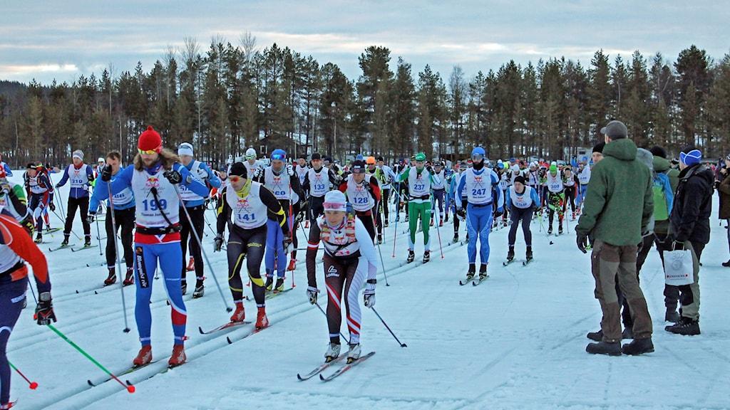 Starten Nordenskiöldsloppet. 400 åkare ger sig iväg. Foto: Alexander Linder/ Sveriges Radio