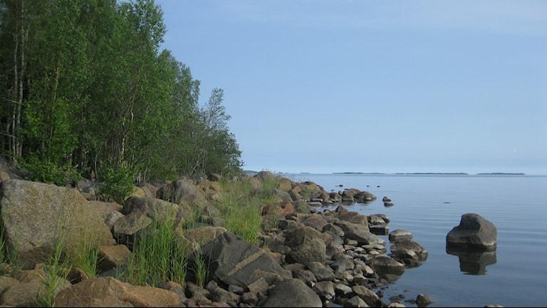 Kalix skärgård. Foto: Sveriges Radio Norrbotten.