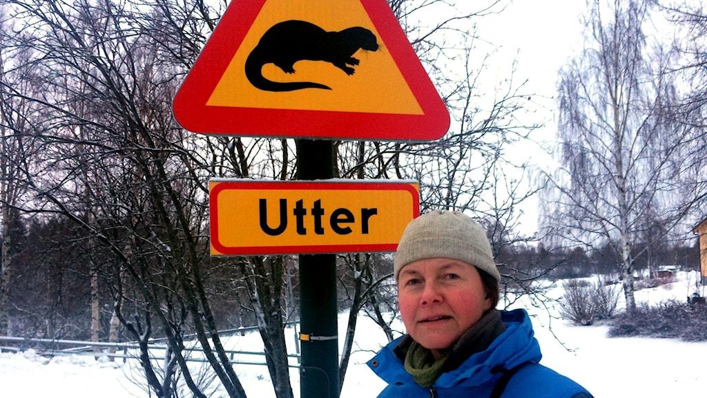 Susanne Backe, biolog på länsstyrelsen, inventerar utter.