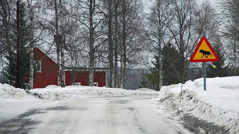 Älgvarningsskylt i Orrbyn. Foto: Eleonor Norgren/Sveriges Radio.